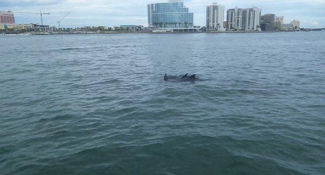 uiterlijk dolfijn plaatje